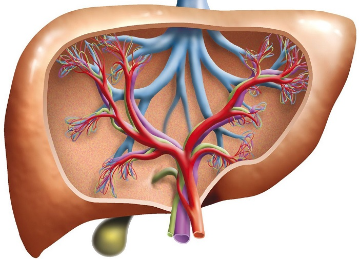 Ультразвуковая диагностика портальной гипертензии